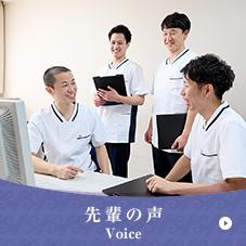 先輩の声/Voice